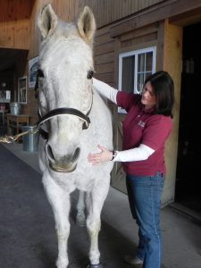 Horse Rehabilitation, Massage Therapists, Bodywork, Myofasical Release- Maryland