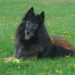 Canine Rehabilitation and Dog Massages in Maryland