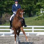 MartinTucker- Equine Rehabilitation and Horse Bodywork in Maryland