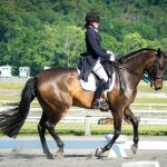 Schoepp- Equine Rehabilitation and Horse Bodywork in Maryland